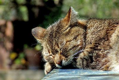 Lieux insolites où dorment les chats